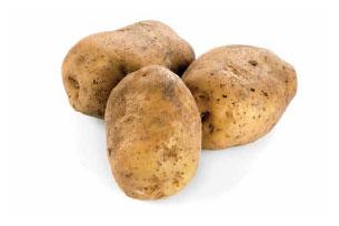 Potato Yield