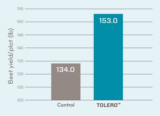 Tolero Sugarbeet Trial Data