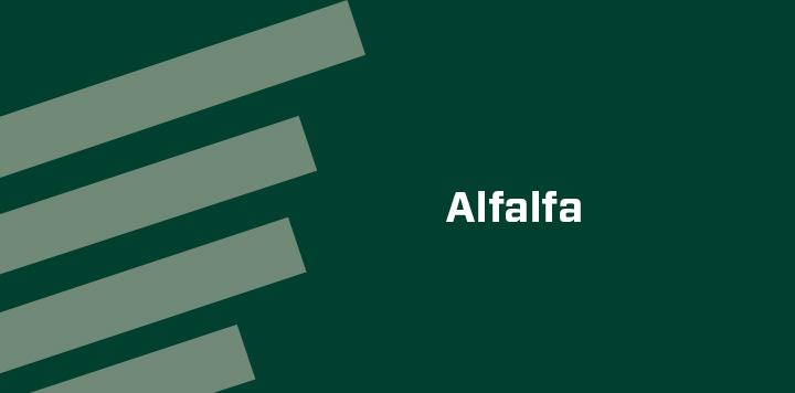 Alfalfa crop seed