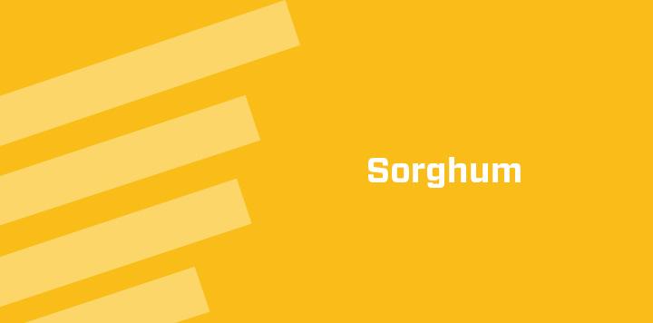 Sorghum Agricultural Seed